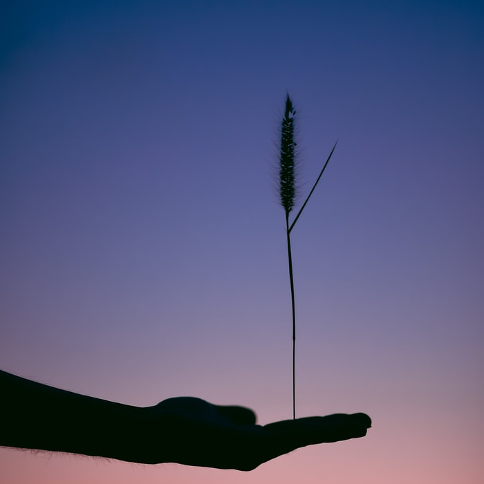 Cattail Plant Balancing on Outstretched Hand